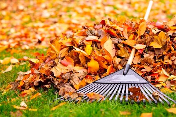Landscape Maintenance and Clean Up